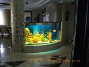 Организация и проведение аквариумных выставок.Зоомагазин под ключ. - foto 0