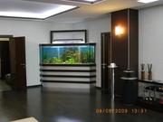 Организация и проведение аквариумных выставок.Зоомагазин под ключ. - foto 3