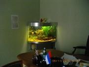 Организация и проведение аквариумных выставок.Зоомагазин под ключ. - foto 5