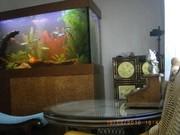 Организация и проведение аквариумных выставок.Зоомагазин под ключ. - foto 7