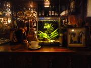 Организация и проведение аквариумных выставок.Зоомагазин под ключ. - foto 8